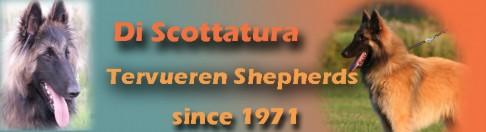 banner_scottatura