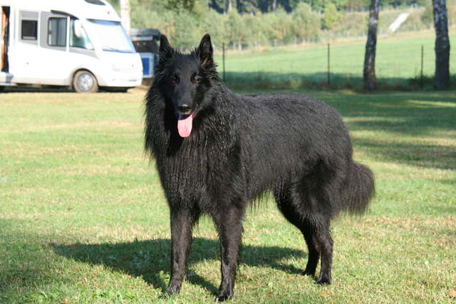 Odin im September 2016